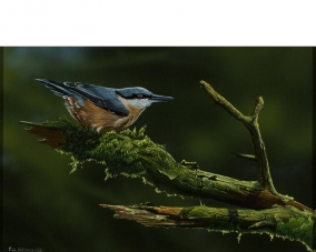 Nuthatch In The Green