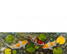 Three Koi Under The Water Lily