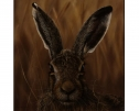 Big Ears (Hare) by Stephen Park