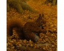 Red Squirrel by Stephen Park