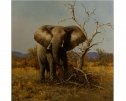 The King (Large Elephant) by Stephen Park